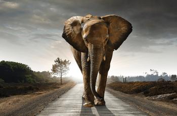 1250 ton Denná spotreba základných surovín je 1250 ton, ktorá sa rovná váhe 208 afrických slonov